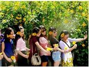 CHÙM ẢNH: Mê mẩn với miền hoa DÃ QUỲ vàng rực Đà Lạt