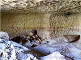 Tìm thấy 12 mộ pharaoh ở Aswan, Thượng Ai Cập