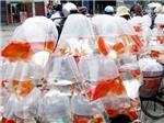 Nhộn nhịp thị trường mũ áo, cá chép... tiễn Táo quân chầu trời