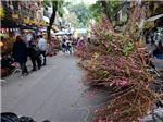 Hà Nội: Chợ hoa Hàng Lược 'vắng như chùa Bà Đanh' ngày cận Tết